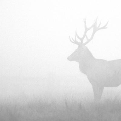 <b>Jeleň</b> <br><br> ani som si ho takmer v tej hmle nevšimol. Keby nezaručal.