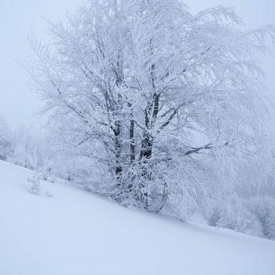 zima na Minčole